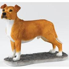 Staffordshire Bull Terrier - Tan & White